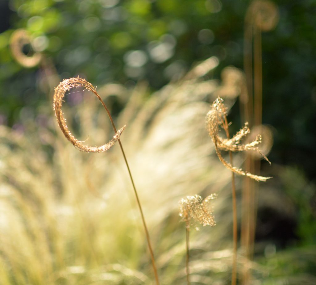 Grasses in sunshine